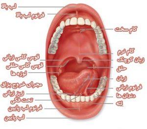 oral-cavity